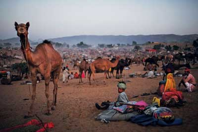 Pushkar camel fair  with golden triangle tour package India