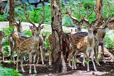 Golden Triangle with Wildlife Tour in India
