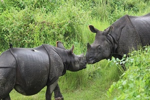 wildlife of chitwan nepal
