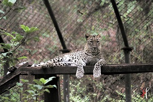 wildlife sanctuary in goa india